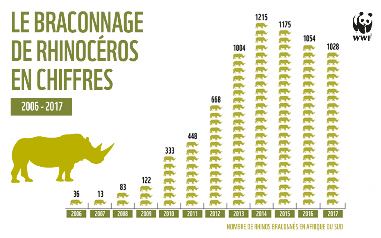 Infographie rhinocéros braconnés 2017