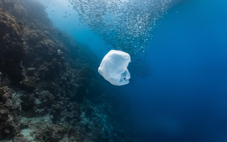 Un sac plastique et un banc de poissons près d'un récif peu profond