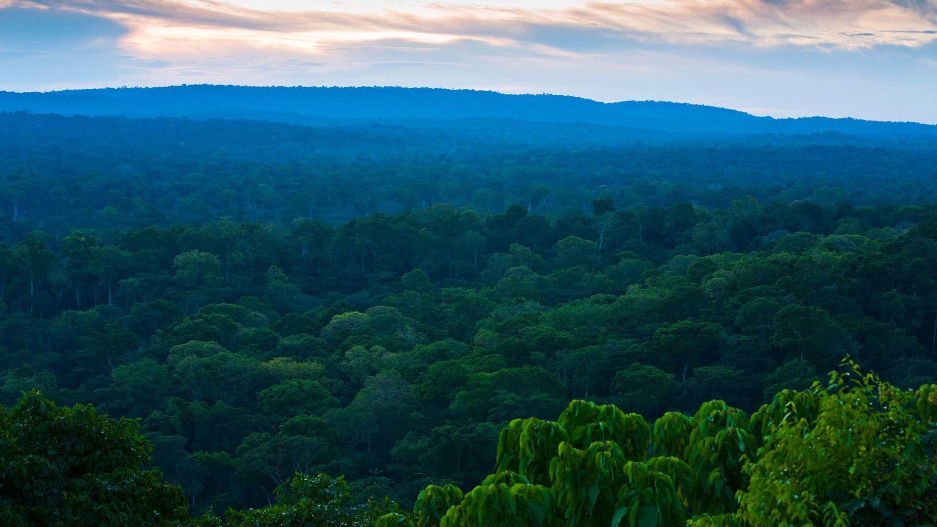 Le bassin du Congo, forêt pluviale menacée   WWF France
